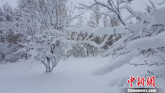 张掖市沿祁连山部分地区,普降大雪,积雪厚度最深可达10厘米。 杜明阳 摄